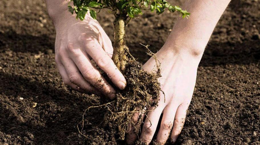 bahçe temizliği hizmeti